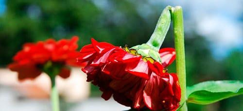 сломанный цветок