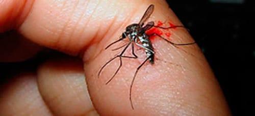 убить комара