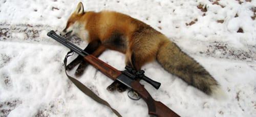 убить лису