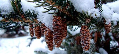 Сонник елка к чему снится елка во сне