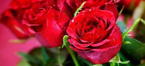 букет красных цветов во сне