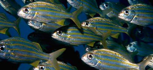 много рыбы в море во сне