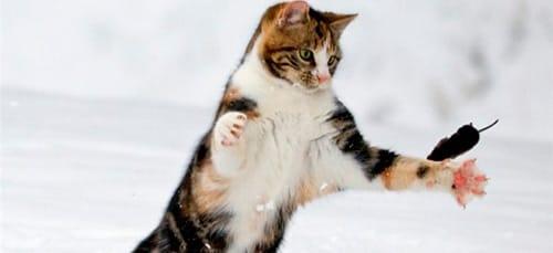 к чему снится кошка ловит мышку