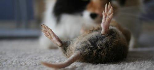приснился кот ловит мышей