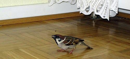 птичка залетела в дом во сне