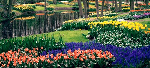 к чему снится цветочный сад