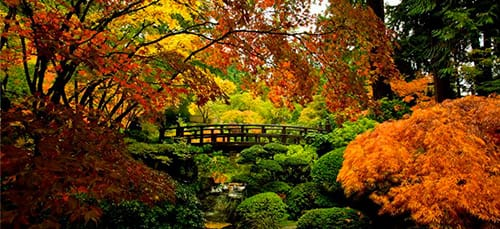 Сонник сад к чему снится сад во сне