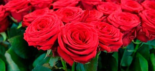 к чему снятся красные розы