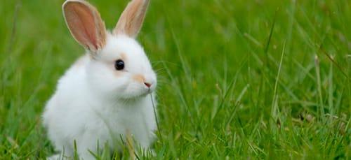 сонник белый кролик