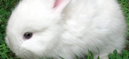 к чему снится маленький белый кролик