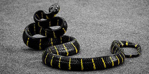 К чему снится большая черная змея?