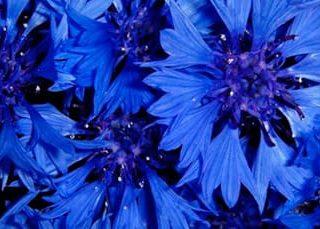 К чему снится синий цвет?