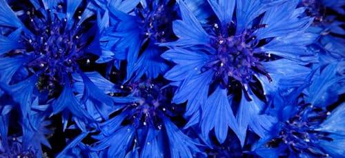к чему снится синий цвет