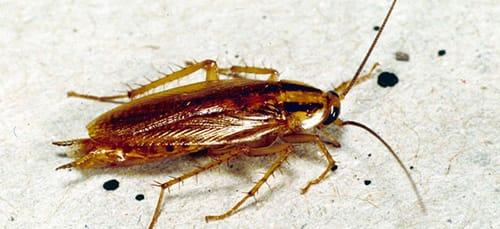 сонник давить тараканов