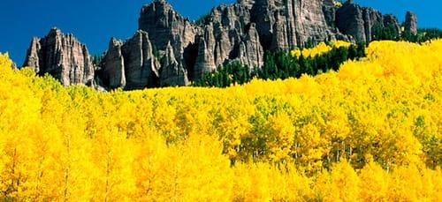 к чему снится желтый цвет