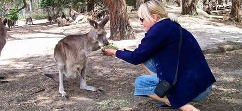 к чему снится кормить кенгуру