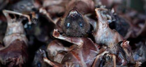 сонник мертвые мыши