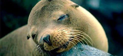 Фото Видеть во сне морских котиков