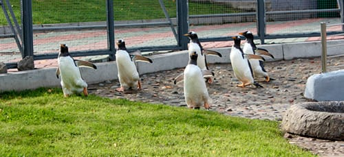 пингвины в зоопарке во сне