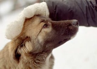 Гладить собаку