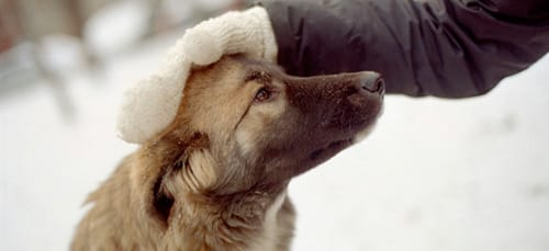 к чему снится гладить собаку