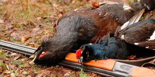 охота на птиц во сне