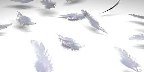 к чему снятся перья