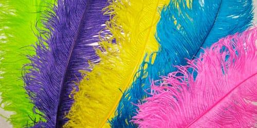 цветные перья во сне
