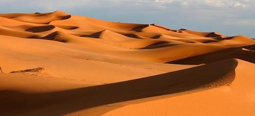 сонник пустыня