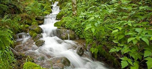 к чему снится ручей