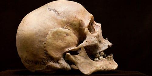 сонник череп человека