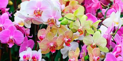 Сонник орхидея к чему снится орхидея во сне