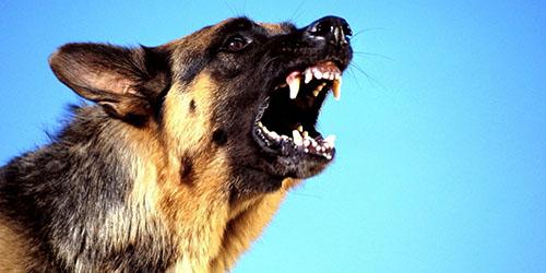 приснилась отрубленная голова собаки