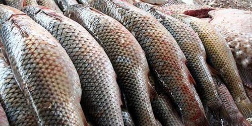 сонник покупать рыбу