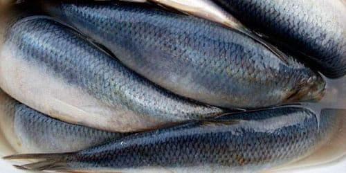 покупать соленую рыбу во сне