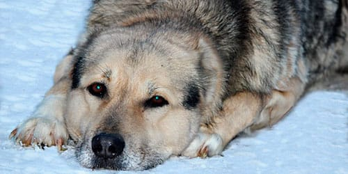 Сонник избитая собака фото