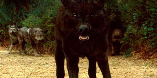 нападает черный волк во сне