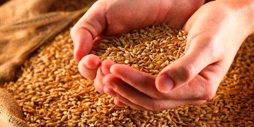 сонник зерно