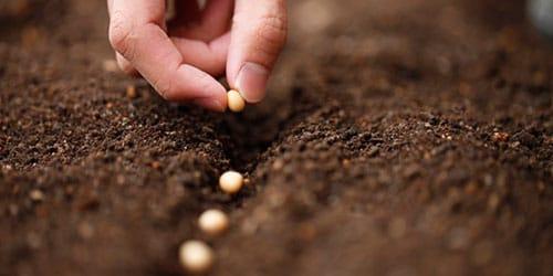 к чему снится сеять зерно