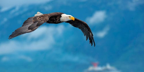 орел в небе во сне