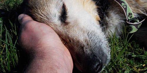 сонник умершая собака
