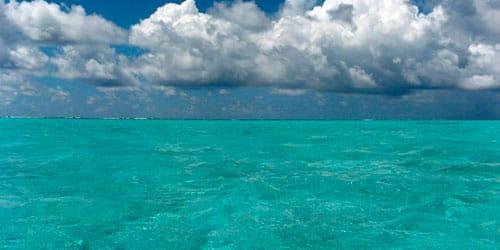 сонник голубое море