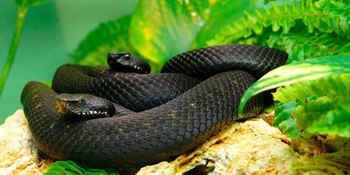 сонник маленькие змеи