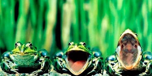 сонник много лягушек