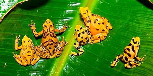 Сонник много лягушек к чему снится много лягушек во сне