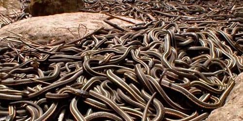 сонник много змей