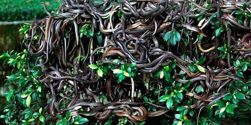 много змей во сне