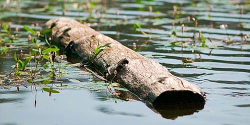 к чему снится бревна плывут по реке