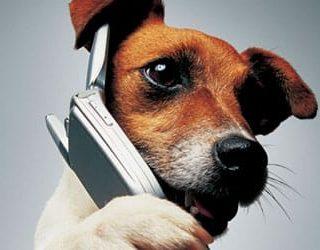 К чему снится говорящая собака?