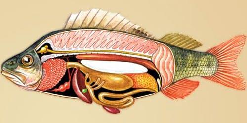 к чему снятся потроха рыбы